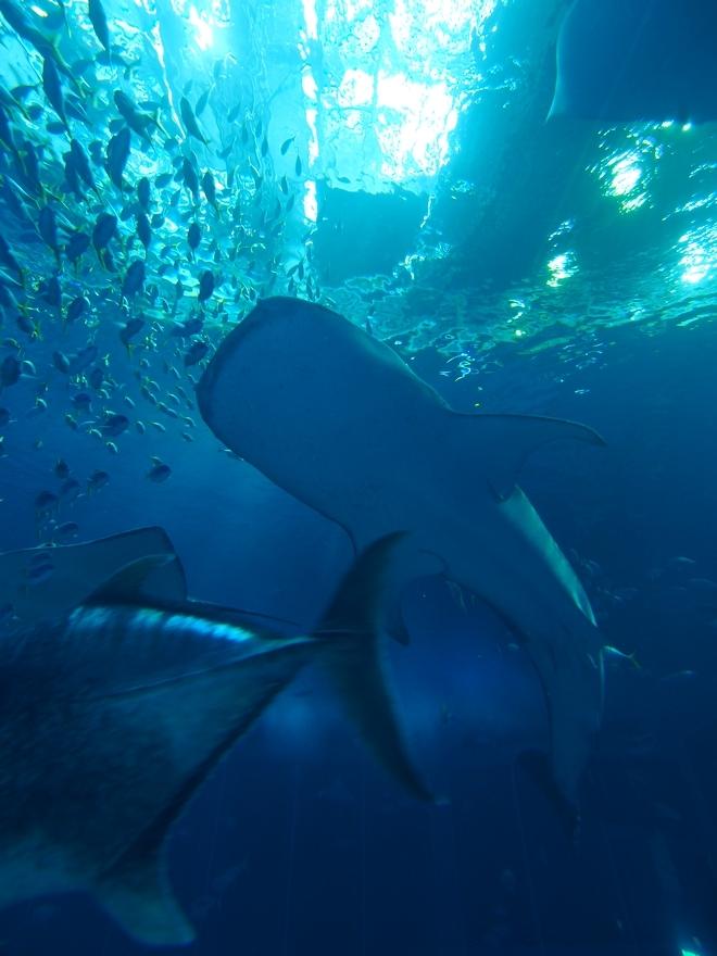沖縄旅行2021年2日目 美ら海水族館