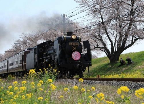大麻生 汽車と桜と菜の花