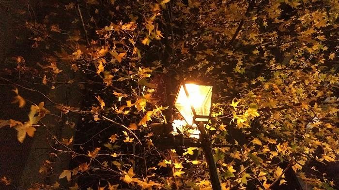 通勤路の街灯