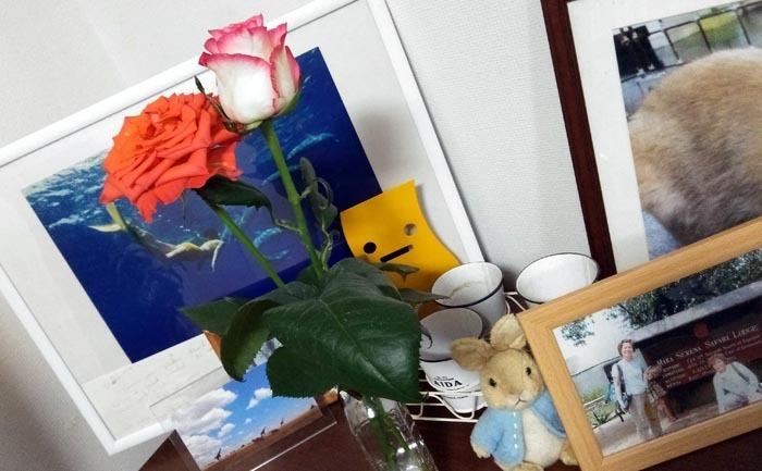 20210627薔薇