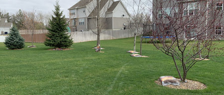 backyard2101.jpg