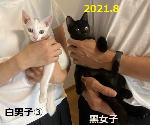 210902011.jpg