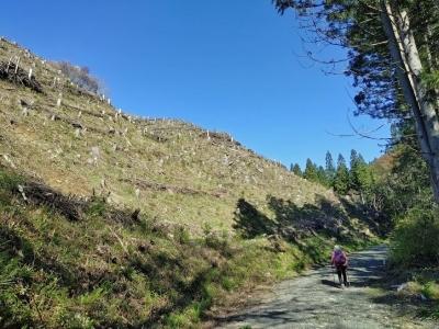 七つ滝への林道