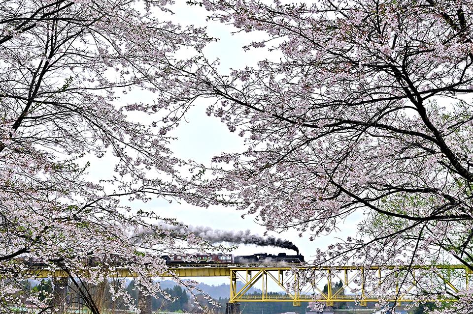 banmonosakura