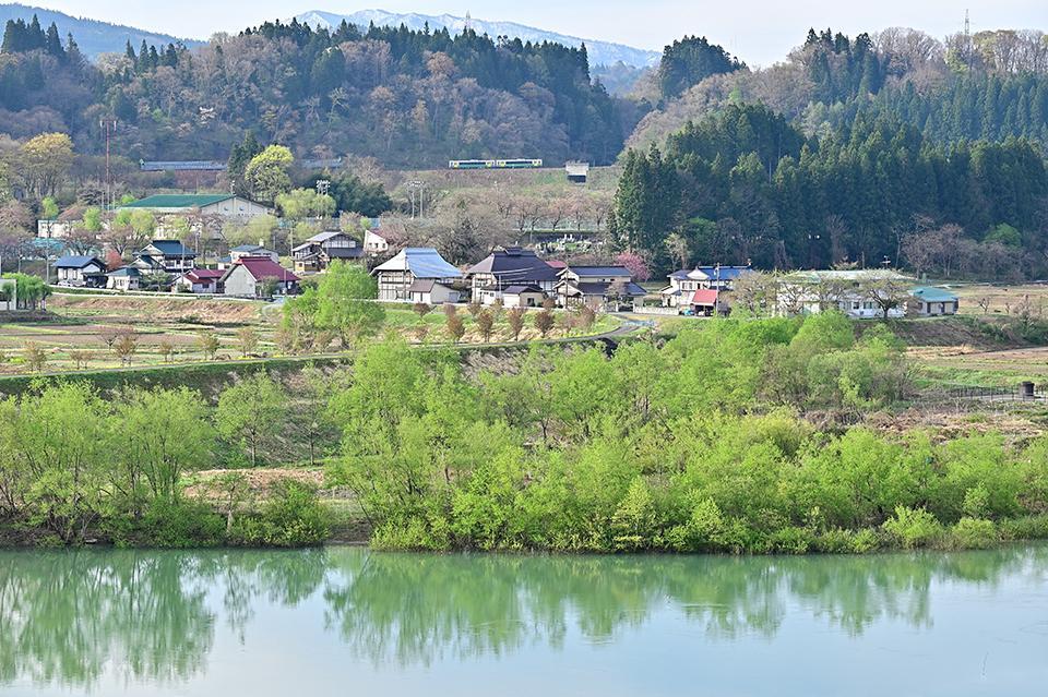 yanaidukawazakura