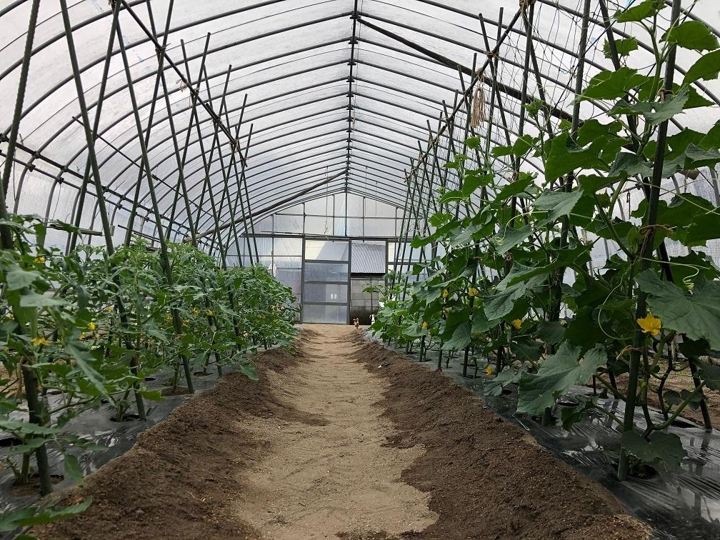 ハウスの野菜2021