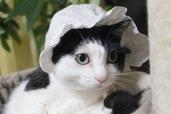 多分ね息子がベビーのときの帽子