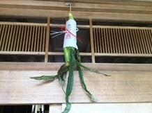 唐黍を吊るす
