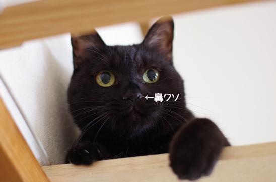 dfdふぇれれれれれのコピー