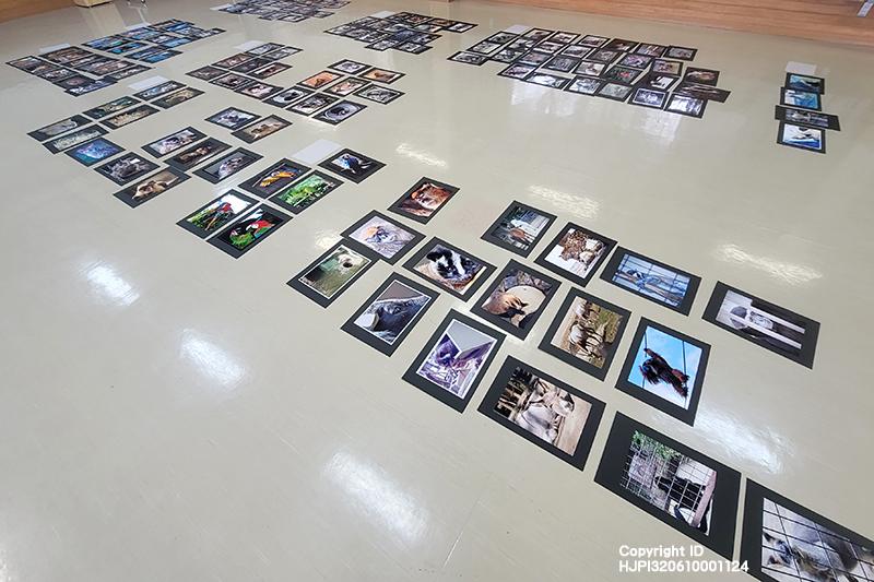 とべ動物園写真コンクールの審査をしました。たくさんのご応募をいただき、ありがとうございました。