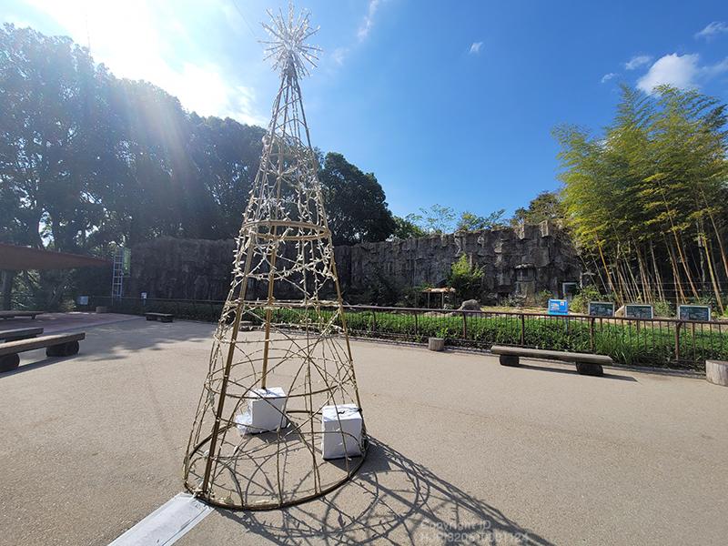 えひめこどもの城~とべ動物園をつなぐ四国最大級のスケールのジップラインとトラ舎の間に大きなクリスマスツリーが登場しました。