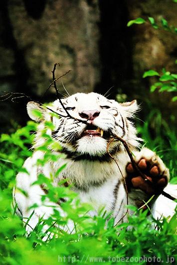 第9回とべ動物園写真コンクール 受賞作品 佳作「秘密の遊び」