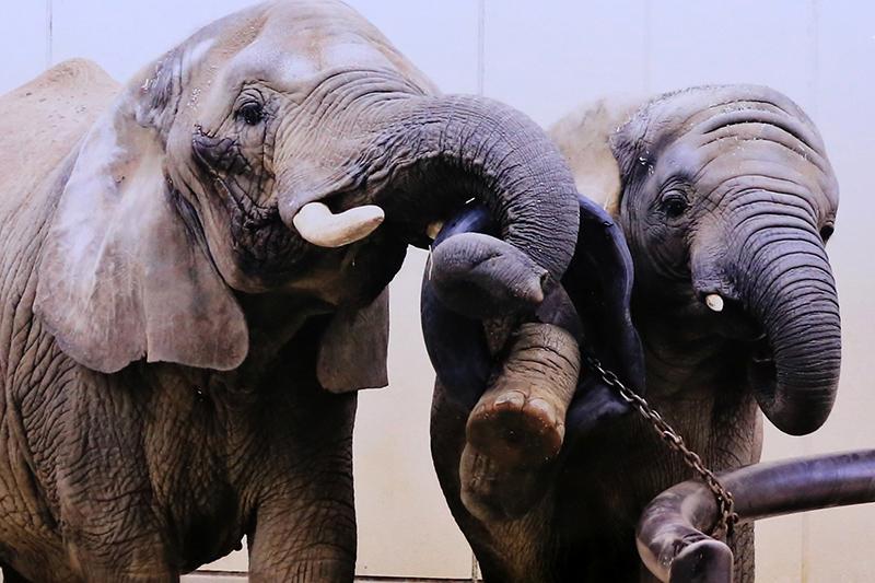 第9回とべ動物園写真コンクール 受賞作品 佳作「うちの娘が毎度すみません」