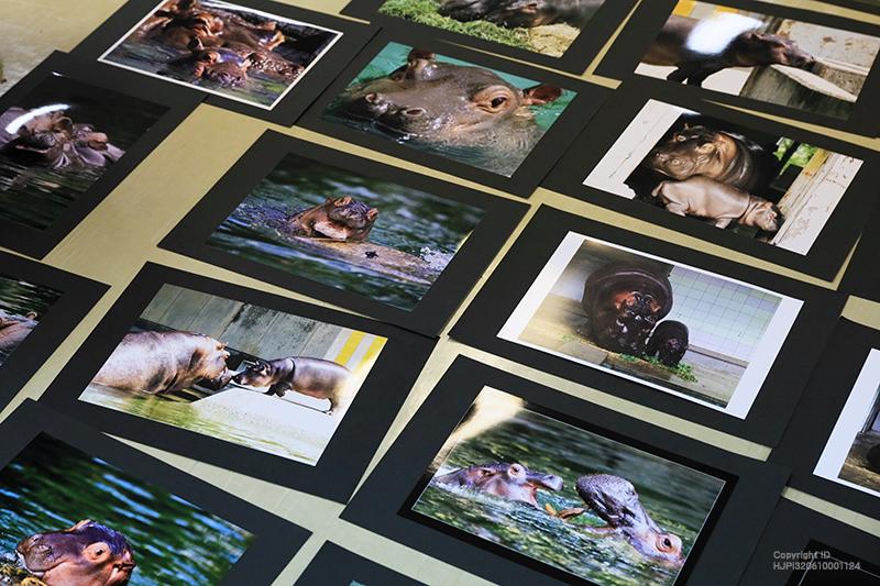 とべ動物園写真コンクールの審査結果発表です。244点もの応募の中から受賞作品26点が決定しました。
