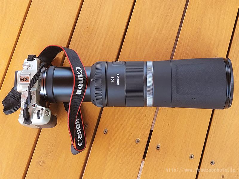 超望遠レンズ キヤノン「RFレンズ RF800mm F11 IS STM」実写レビュー