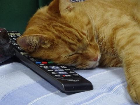 「我が家の愛猫「如来くん」は、リモコンを枕に寝ています!」
