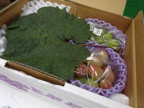 「ぶどうの葉っぱ」①