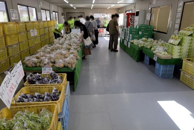 210828-JA香川県和田支所ホウナンの梨-007-S