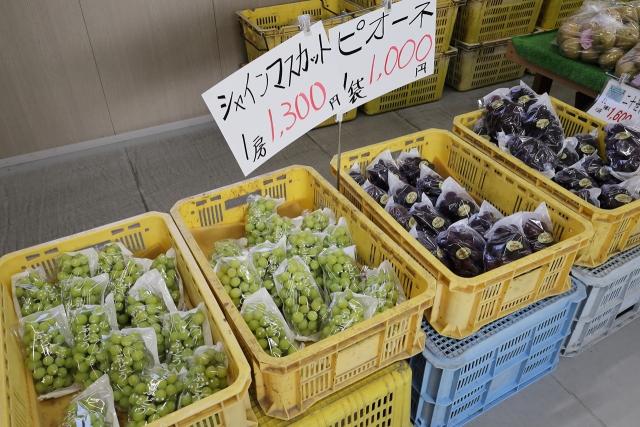 210828-JA香川県和田支所ホウナンの梨-008-S