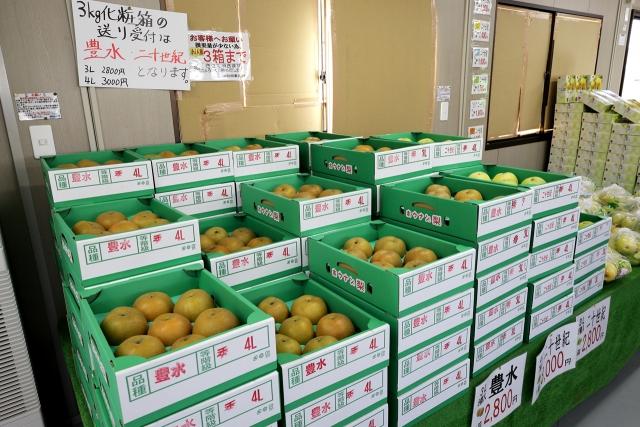 210828-JA香川県和田支所ホウナンの梨-010-S