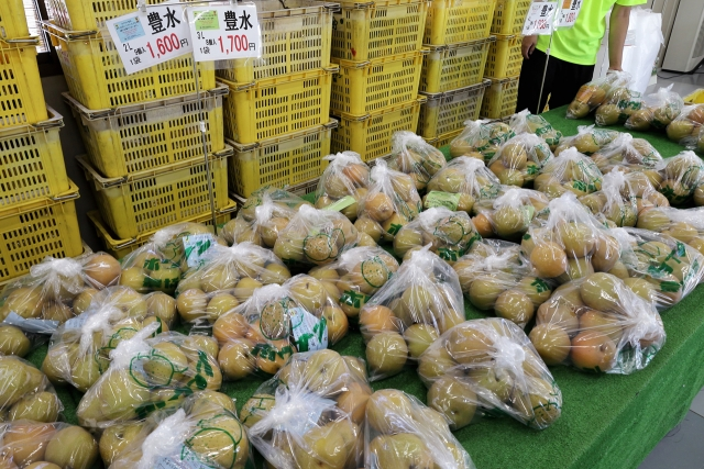 210828-JA香川県和田支所ホウナンの梨-012-S