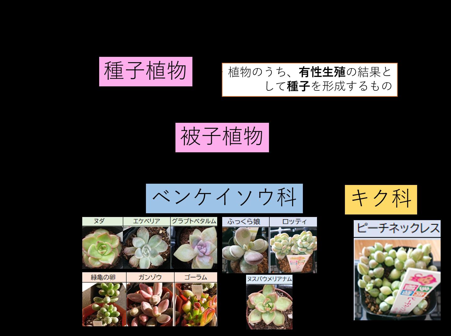系統図 会社員の多肉