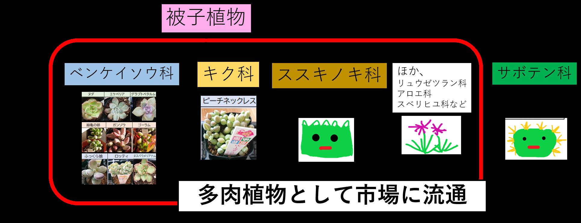 会社員の多肉植物 科の系統図