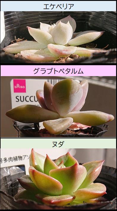 葉の厚み比較