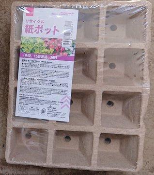 会社員の多肉植物葉(よう)  100円ショップのポット
