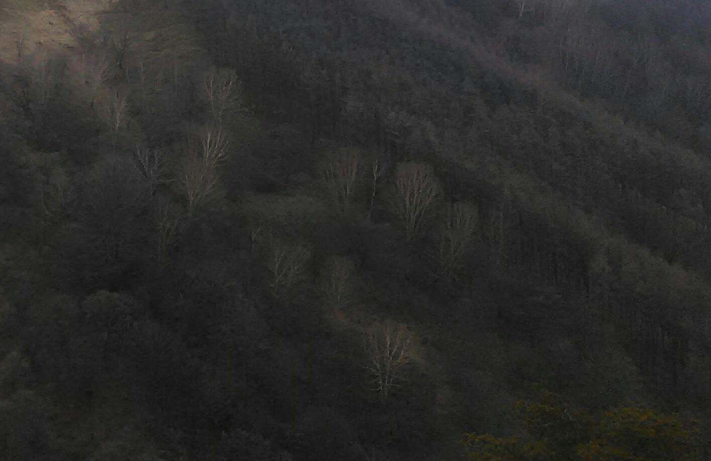 鉢伏山の早春