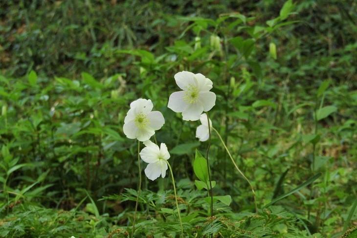 ichirinsou210410-108.jpg
