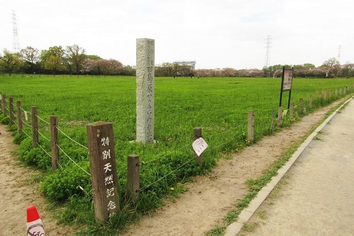 sakurasou210404-102.jpg
